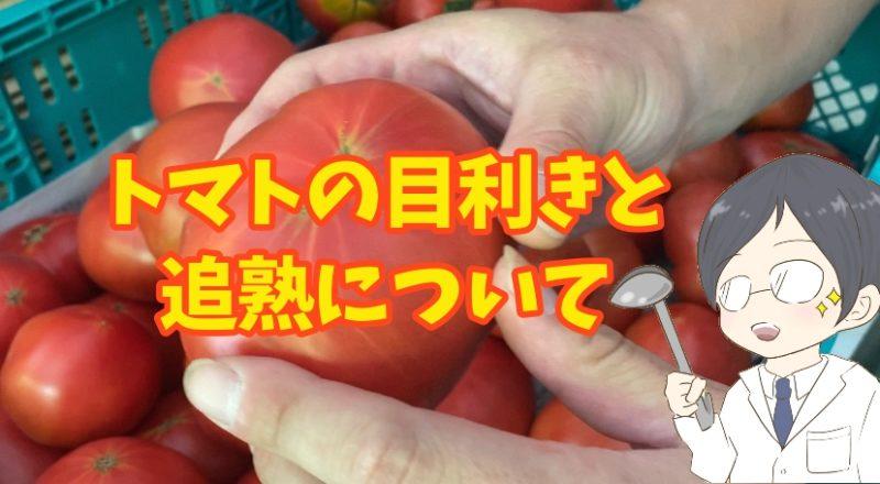 美味しいトマトの見分け方「4つの目利きポイント」トマトの見た目に騙されてはいけない!